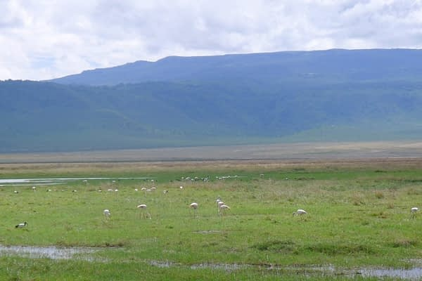 flamingos in the Ngorongoro Crater