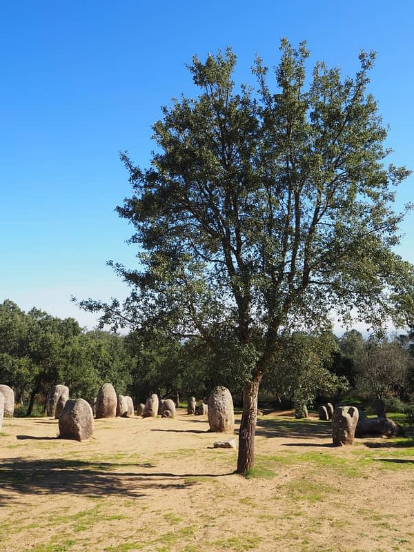 cork trees around the Cromlech megalith, Portugal