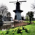 5 Things To Do in Schiedam, South Holland