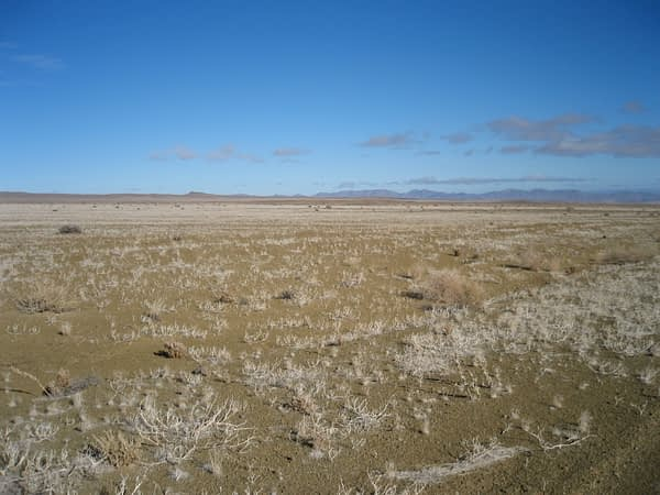 grassy plains in Namibia
