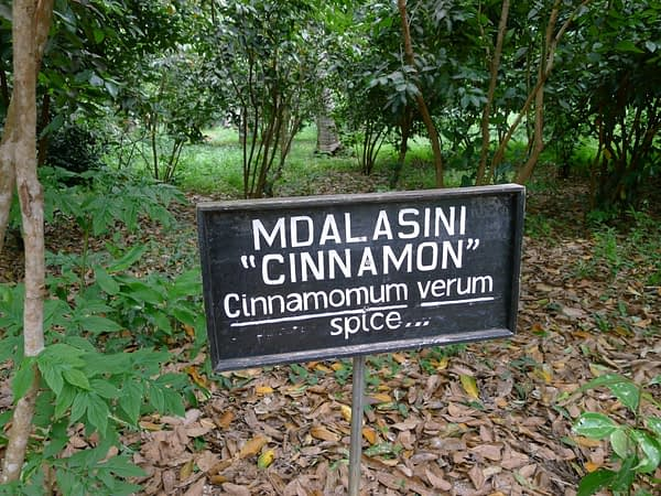 cinnamon plants and sign
